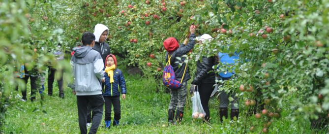 Banyan community members at an apple orchard picking apples